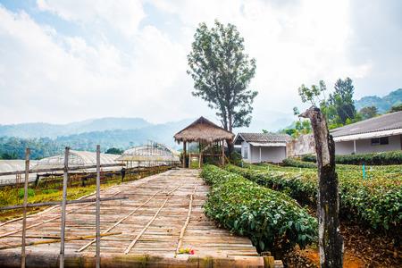 wang: Chiang Mai Royal Agricultural Research Centre Khun Wang at Chiang Mai Province, Thailand.