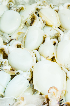 mollusca: Fresh squid at fresh market, Thailand