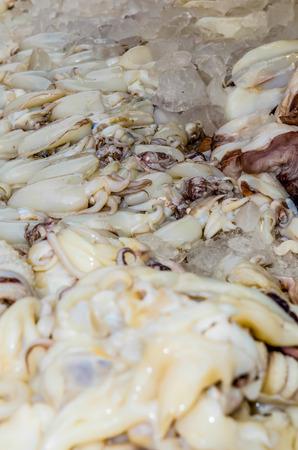 deep freeze: Fresh squid at fresh market, Thailand