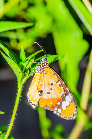 Beautiful butterfly on green leaf in public park, Thailand. photo