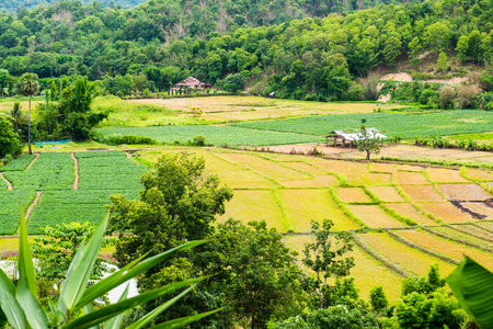 Agricultural view at Chiangmai province, Thailand,