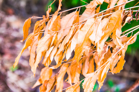 dry leaves: Dry leaves in Thai forest, Thailand.
