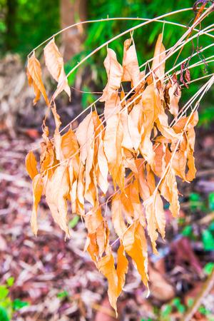 hojas secas: Las hojas secas en el bosque tailand�s, Tailandia. Foto de archivo