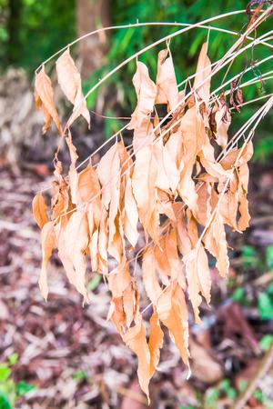 hojas secas: Las hojas secas en el bosque tailandés, Tailandia. Foto de archivo