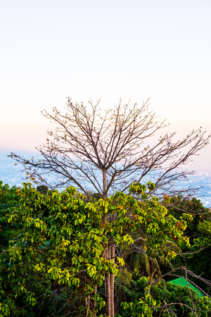 chiangmai province: Tree Silhouette with Sunset Time at Chiangmai Province, Thailand.