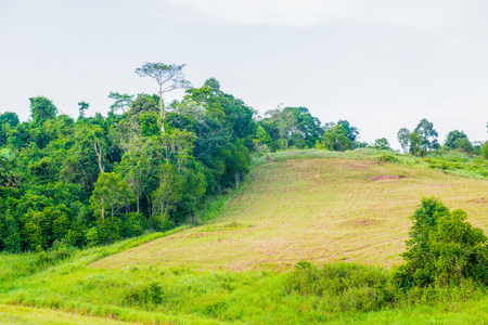 tropical evergreen forest: Tropical rain forest with green field in Khoyai national park, Thailand