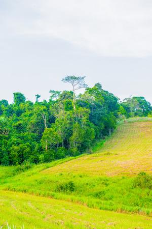 champ vert: Tropical rain forest with green field in Khoyai national park, Thailand