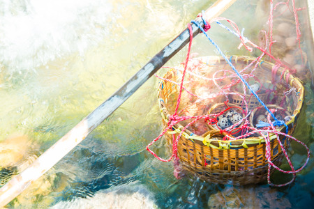 huevos de codorniz: huevos de codorniz en agua caliente, Tailandia