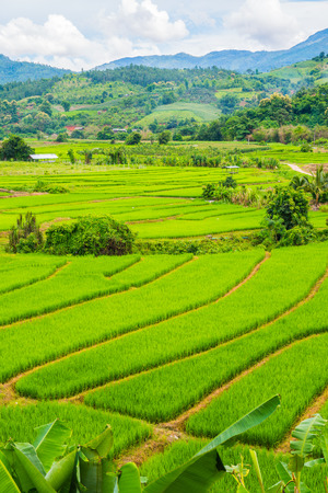 Rice terraces in country, Thailand.