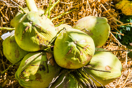 Fresh coconuts, Thailand