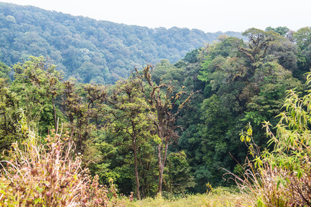 doi: Forest in Doi Inthanon National Park, Thailand