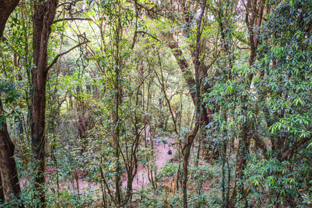 tropical tree: Abundance of forest in Doi Inthanon National Park, Thailand