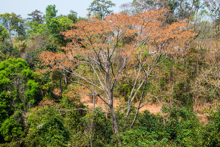 treetop: Treetop in forest, Thailand Stock Photo