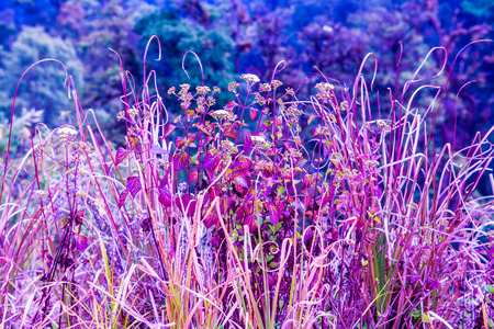 small plant: Small Plant in Doi Inthanon National Park, Thailand Stock Photo