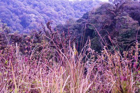national plant: Small Plant in Doi Inthanon National Park, Thailand Stock Photo