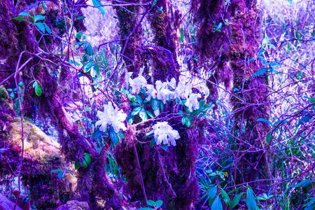 Abondance de la forêt dans le parc national Doi Inthanon, Thaïlande Banque d'images