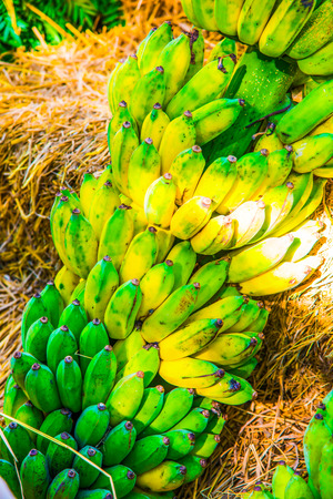 cultivated: Cultivated banana, Thailand Stock Photo