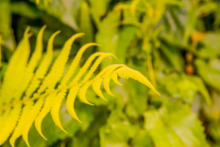 fern leaf: Fern leaf with natural green background, Thailand. Stock Photo