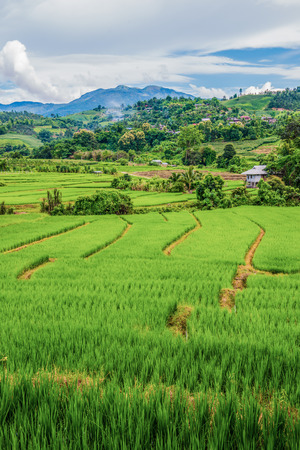 terraces: Rice terraces in country, Thailand.
