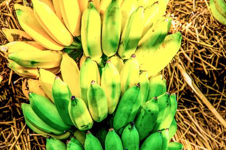 Cultivated banana, Thailand Stock Photo