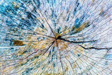 Closeup of wood texture, Thailand Stock Photo