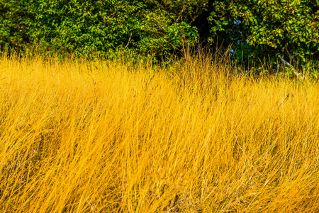 dry grass: Dry grass on mountain, Thailand