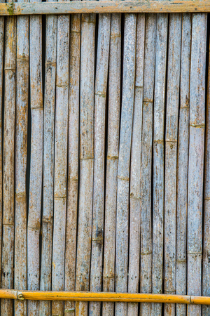 thailand bamboo: Background of bamboo wall, Thailand