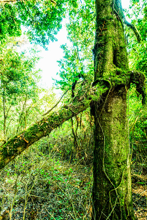 Abundance of forest in Doi Inthanon National Park, Thailand