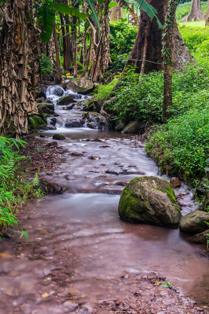 Forest View in Champa Thong Waterfall, Thailand.