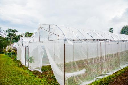 Plant nurseries on mountain, Thailand.