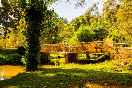 phu: Natural view at Phu Sang waterfall, Thailand.