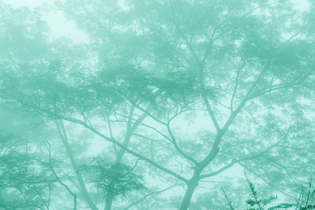 Forest with mist in winter season at Phayao province, Thailand. Stock Photo