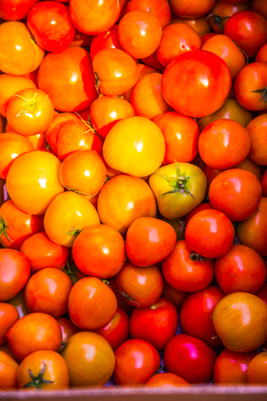 Group of orange tomatoes, Thailand.
