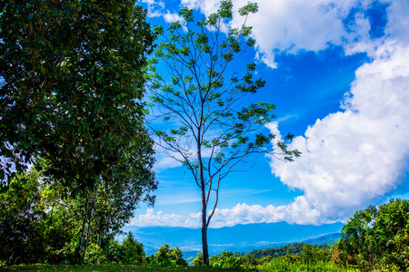Natural view of Huai Nam Dang national park, Thailand. Stock Photo