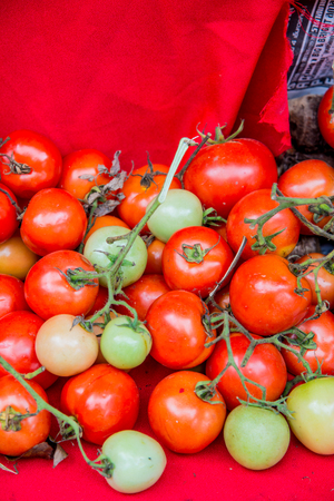 Group of red tomatoes, Thailand.