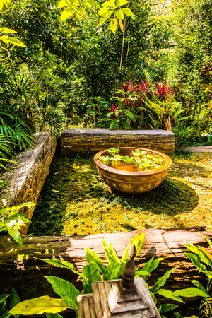 Duckweed in baked clay basin, Thailand.