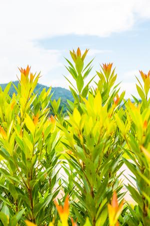 Beautiful treetop, Thailand. Stock Photo