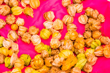 Fresh cape gooseberry on pink cloth, Thailand.