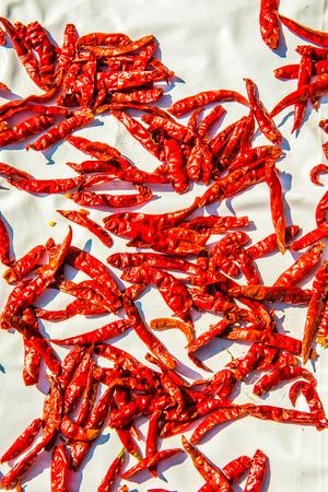 Red dried chilli, Thailand Foto de archivo