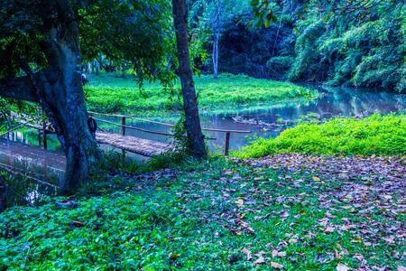 river county: Natural view at Phu Sang waterfall, Thailand.