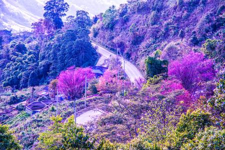 Road to Doi Pha Tang at Chiangrai province, Thailand.