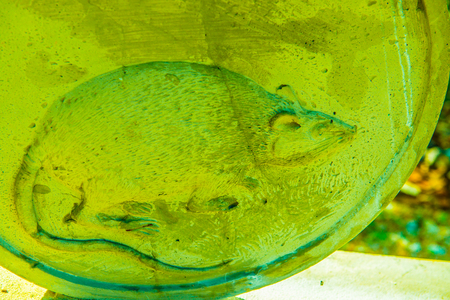 Rat molding art, Thailand.