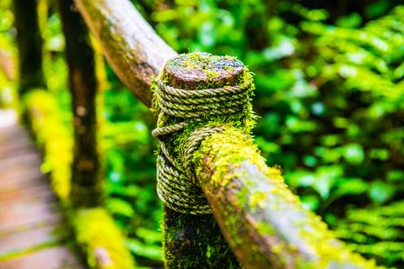 Wooden handrail in Doi Inthanon national park, Thailand.