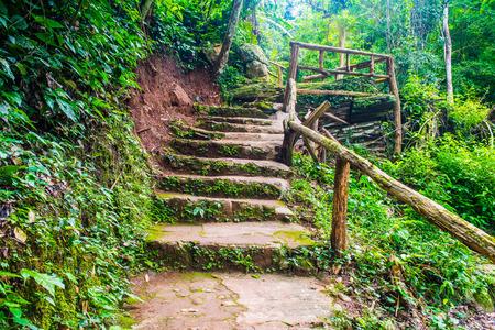 Stairway in forest, Thailand.