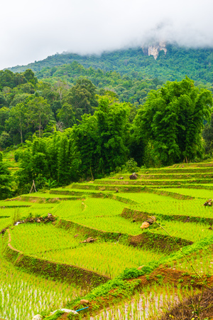 Rice terraces in Chiangmai province, Thailand.