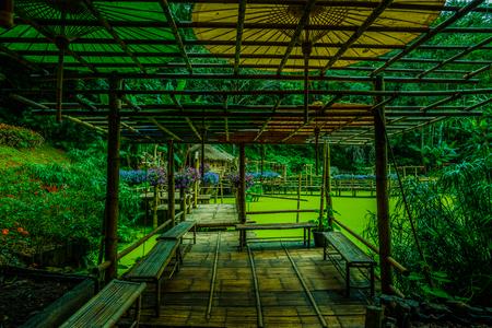 Bamboo Walkway of Mae Fah Luang Garden, Thailand.