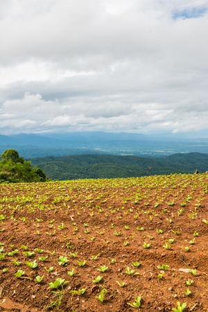 Agricultural area on mountain, Thailand.