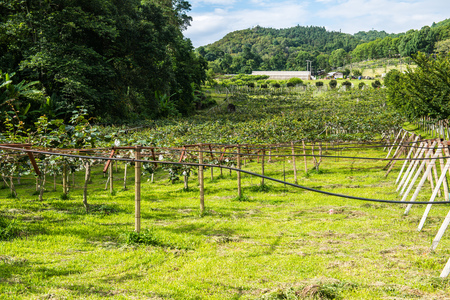 Landscape View of Royal Agricultural Station Angkhang, Thailand. Stock Photo