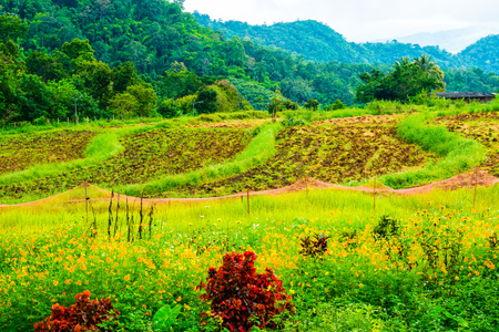 northern light: Landscape of Samoeng rice research center, Thailand. Stock Photo