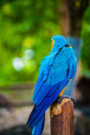 Macaw bird on tree, Thailand.